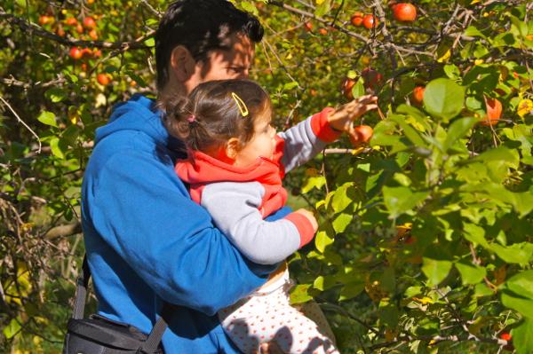 Apple Season: Picking Plus Saucing | Twin Cities Moms Blog