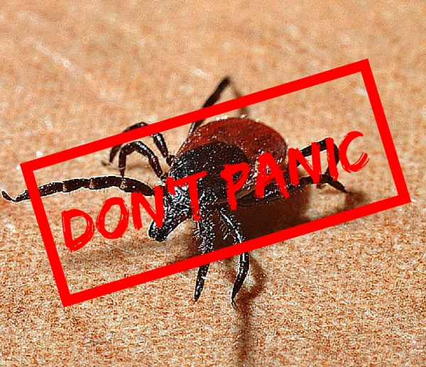 Let's Talk About Ticks | Twin Cities Moms Blog