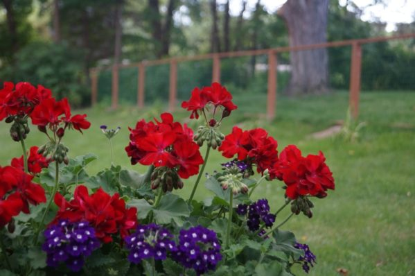 How a Fence Saved My Marriage and Family | Twin Cities Moms Blog