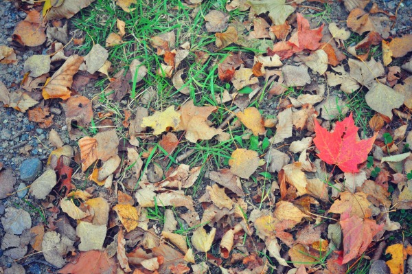 Fall Makes Me Happy to Be A Mom | Twin Cities Moms Blog
