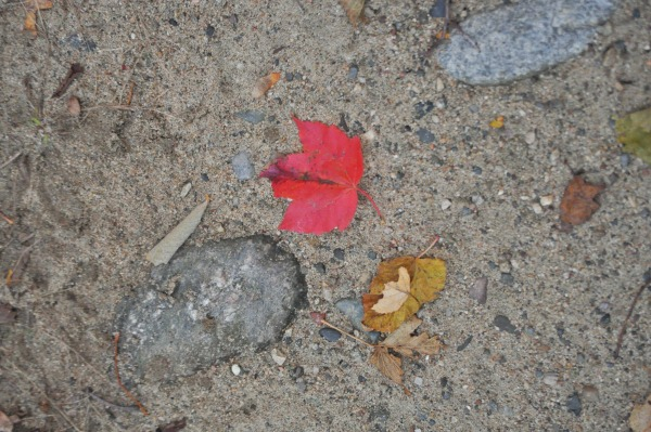Fall Makes Me Happy to Be A Mom   Twin Cities Moms Blog