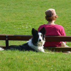 border-collie-1541852_640 (1)