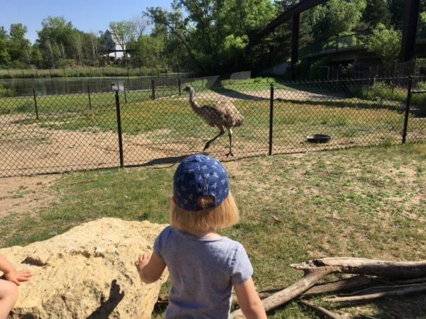Kangaroo Crossing at MN Zoo | Twin Cities Moms Blog