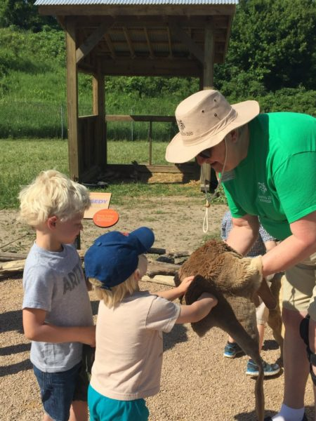 Kangaroo Crossing at MN Zoo | Twin Cities Moms Blog