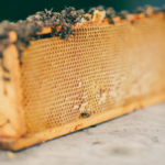 Finding CommonGround: Buzzin' About Bees!
