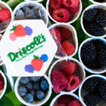 A Berry Merry Morning with Driscoll's