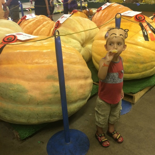 It's Okay If You Don't Like the Minnesota State Fair | Twin Cities Moms Blog