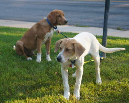 Fostering Animals Made Me a Better Mom | Twin Cities Moms Blog