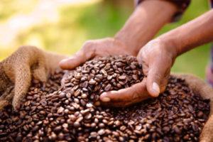 Coffee bean produce benefits from fair trade farming