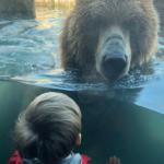 Celebrate the Minnesota Zoo's 40th Anniversary!