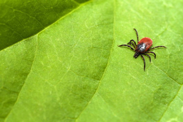 Ticks | Twin Cities Moms Blog