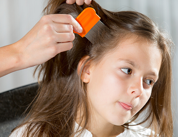 The Low-Down on Lice   Twin Cities Moms Blog