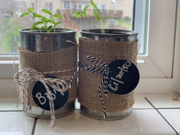 How To Grow Windowsill Herbs | Twin Cities Moms Blog
