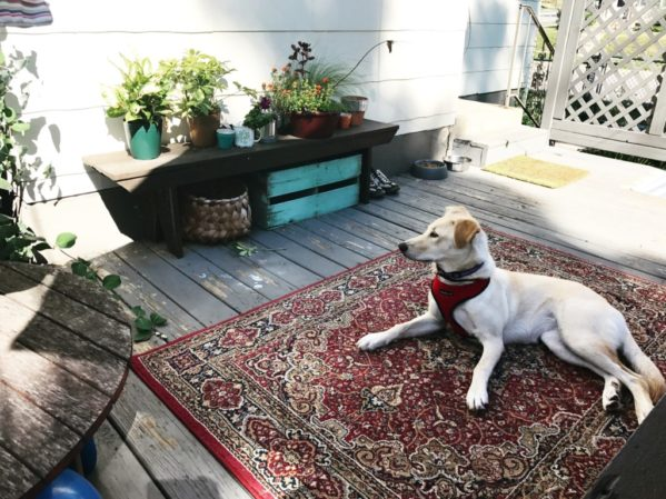 Our Rescue Dog Adventure | Twin Cities Moms Blog