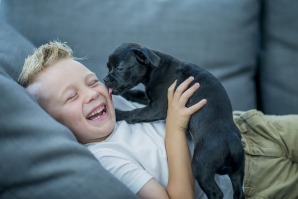 I Love Dogs, but I'm Glad I Don't Own One | Twin Cities Moms Blog